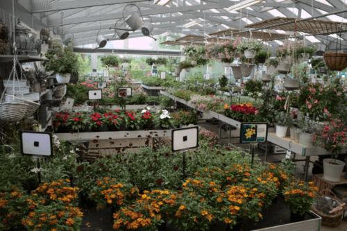 skraedderbakkens-havecenter-blomster
