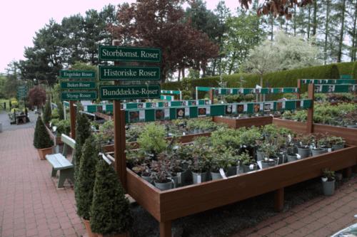 skraedderbakkens-havecenter-blomsterudvalg